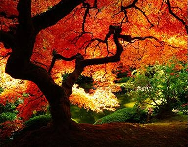 L'arbre de vie, un symbole mystique fort